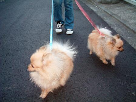 お散歩二匹小.JPG
