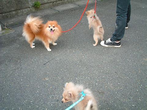3匹でお散歩小.JPG