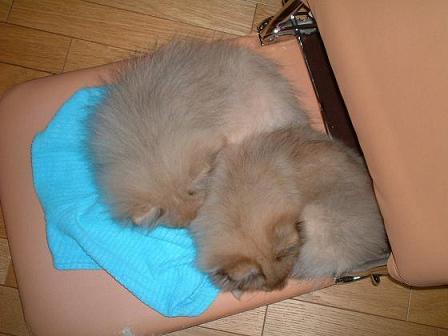 寝てるユウナナ小.JPG